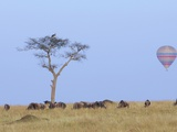 Ballooning Over Wildebeests