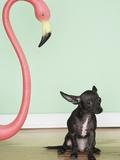 Chihuahua next to a pink flamingo