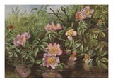 Postcard with Flowers Reflected in Water