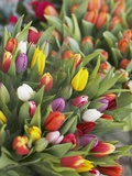 Bunches of colorful tulips