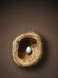 Single Egg in Nest