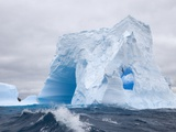 Blue Iceberg Sculpted by Waves and Southern Giant Petrel in Flight