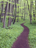 Trail Through Trees in Forest