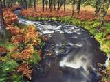 Stream Flowing Through Woods