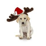 Puppy with Santa Hat and Reindeer Ears
