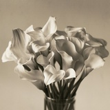 Calla Lilies in Vase