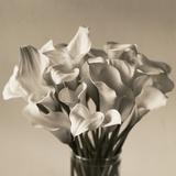 Calla Lilies in Vase