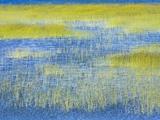 Wetland Grasses in Lake Papier Photo par John Eastcott & Yva Momatiuk