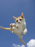 Orange and White Kitten Mid-air
