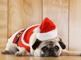 Dog in Santa Suit