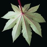 Leaf and Stem