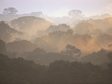 Morning Fog and Tropical Rainforest Canopy in Ecuador