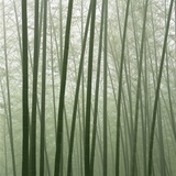 Chinese Bamboo Forest