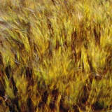 Abstract dry crops