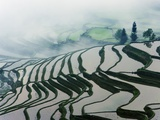 Morning Fog Above Rice Fields