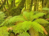 Forest on West Coast of New Zealand's South Island
