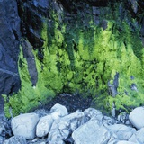 Algae Growing on Rock Cliff