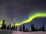 Aurora Borealis above Forest