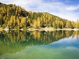 Larch Trees on Lake Seebensee