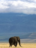 Elephant on Savanna in Ngorongoro Crater