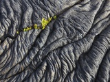 Ferns growing from a crack in a lava flow