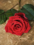 Single Red Rose on Stone Floor