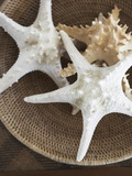 Starfish in a basket