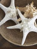 Starfish in a basket Papier Photo par Felix Wirth
