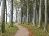 Beech Forest on the Baltic Coast