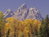 Autumn Color in Grand Teton National Park