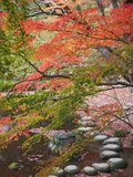 Steppingstones beneath Japanese maple