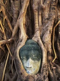 South East Asia  Thailand  Ayuthaya  Wat Mahathat  Buddha Head Entwined in Roots of Banyan Tree
