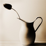 Dark Tulip in Old Enamel Water Pitcher
