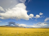 Cumulus Clouds Over Golden Pampas in Chile