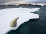 Polar Bear on Melting Iceberg in the Svalbard Islands