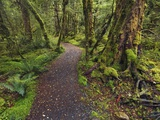 Lake Gunn Nature Walk trail in Fiordland National Park