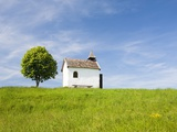 Lime tree and tiny white chapel in rural meadow