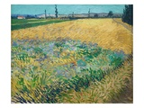 Wheatfield