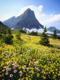 Wildflowers Growing in Mountain Meadow