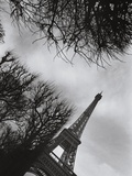 Eiffel Tower and Surrounding Tree Branches