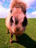 Pony's Nose