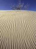 Farwell Canyon Sand Dune  British Columbia  Canada