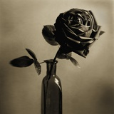 Still Life of a Rose in a Bottle