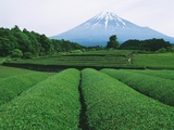 Mt Fuji from tea plantation  Fujinomiya city  Shizuoka prefecture  Japan