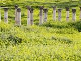 Roman columns rising above field of wildflowers