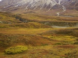 Fall colors on the tundra in Denali National Park