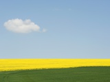 WIltshire field in summer