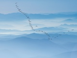 Birds flying above foggy mountains