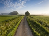 Country road between agricultural fields in England