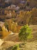 Sandstone hoodoos seen from Sunset Point in Bryce Canyon National Park